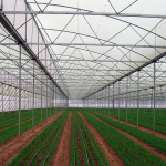 Pertanian Greenhouse